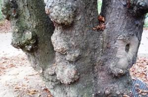 Tronc d'arbre 1