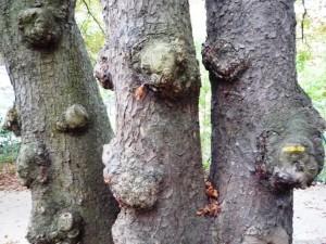 Tronc d'arbre 4