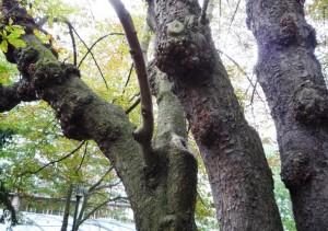 Tronc d'arbre 6